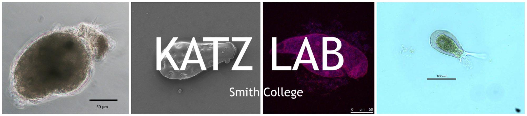 Katz Lab