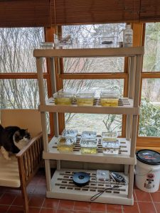 a shelf with science materials in a house with a cat