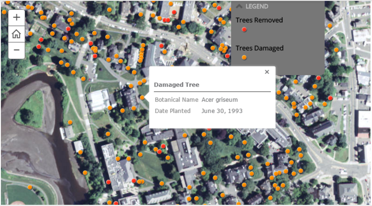 """One of the maps in our Storymap showed damaged trees on campus after """"Snowtober"""" 2011. The map is interactive in that users can click on each dot, representing a damaged tree, to see more detailed information on the tree."""